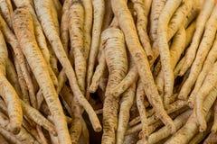 O grupo de coentro bege longo da raiz muitos frutos baseia o aperitivo saudável da sopa vegetal do vegetariano dos ingredientes d imagens de stock royalty free