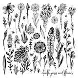 O grupo de elementos pretos da garatuja, flores, prado, aumentou, grama, arbustos, folhas Ilustração do vetor, grande elemento do ilustração stock