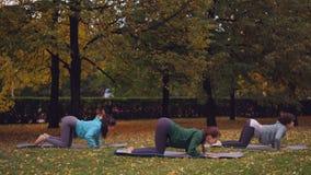 O grupo de estudantes da ioga das jovens mulheres está fazendo exercícios para a espinha saudável que está nas mãos e nos joelhos vídeos de arquivo