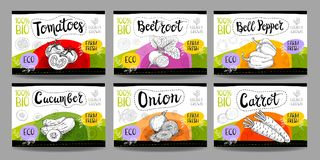 O grupo de etiquetas tiradas mão do alimento, tempera etiquetas, etiquetas do fruto, vege Fotografia de Stock