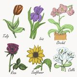 O grupo de flores coloridas - tulipa, íris, orquídea, aumentou, girassol e calla Desenho da mão Graphhics do vetor ilustração stock