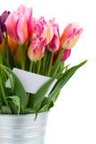 O grupo de flores cor-de-rosa das tulipas fecha-se acima Imagem de Stock Royalty Free