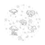 O grupo de folhas, de cogumelos e de gotas tirados mão de outono do esboço arranjou em uma forma de um círculo Símbolos diferente Fotografia de Stock