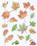 O grupo de folhas de outono, as castanhas, as bolotas e o viburnum em um fundo do caderno cobrem em uma gaiola Imagem de Stock Royalty Free