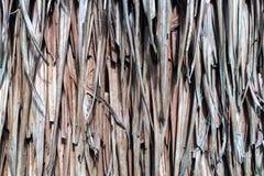 O grupo de folhas secas conectou junto a textura do fundo ou usou-se como telhado natural do projeto do vintage ou mura o estilo  foto de stock royalty free