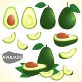 O grupo de fruto de abacate em vários estilos vector o formato ilustração do vetor
