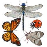 O grupo de insetos gosta da libélula, da borboleta, da joaninha e da traça Foto de Stock