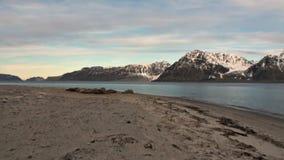 O grupo de morsas relaxa no fundo do por do sol do oceano ártico em Svalbard vídeos de arquivo