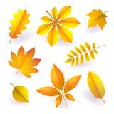O grupo de outono amarelo brilhante isolado caído sae Elementos da folhagem de outono Vetor ilustração royalty free