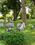O grupo de pássaros descansa em pouco jardim urbano Foto de Stock Royalty Free