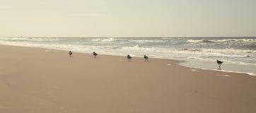 O grupo de pássaros está andando ao longo da linha costeira fotografia de stock