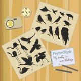 O grupo de pássaros ifferent Imagem de Stock