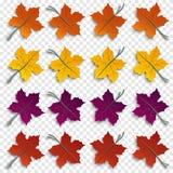 O grupo de papel outonal realístico cortou as folhas da árvore com as sombras isoladas no fundo transparente, elementos do projet Fotos de Stock