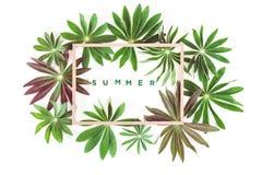 O grupo de quadro exótico verde das folhas isolou-se foto de stock royalty free
