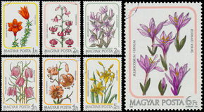 O grupo de selos impressos em Hungria mostra lírios foto de stock royalty free