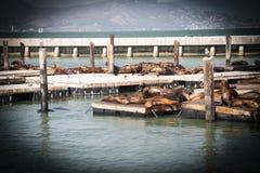 O grupo de selos pesca o banho de sol no aplatform Imagens de Stock Royalty Free