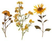 O grupo de selvagem seca flores e as folhas pressionadas fotografia de stock royalty free