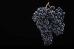 O grupo de uva escuro na luminosidade reduzida no preto isolou o fundo, tiro macro, gotas da água Imagens de Stock Royalty Free