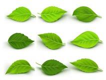 O grupo de verde realístico sae da coleção ilustração stock