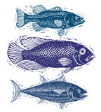 O grupo de vetor pesca, espécie subaquática diferente Seaf orgânico Fotografia de Stock
