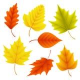 O grupo do vetor das folhas de outono para elementos sazonais da queda com bordo e o carvalho folheiam