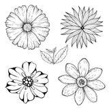 O grupo do vetor de flores incolores tiradas mão e a folha ramificam Ilustração branca preta isolada no branco Fotografia de Stock