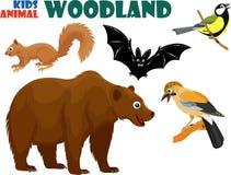 O grupo do vetor de floresta bonito caçoa animais ilustração stock