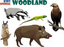 O grupo do vetor de floresta bonito caçoa animais ilustração do vetor