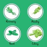 O grupo do vetor de hortaliças e de ervas orgânicas coloriu ícones lisos Foto de Stock Royalty Free