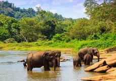 O grupo dos elefantes Imagens de Stock Royalty Free