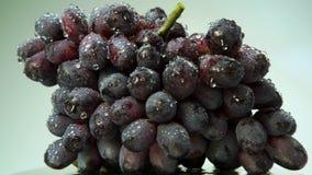 O grupo fresco de uvas para vinho pretas com água deixa cair video estoque