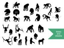 O grupo grande de silhuetas selvagens dos macacos Imagem de Stock