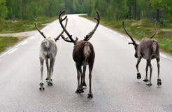 O grupo que anda em uma estrada Fotos de Stock