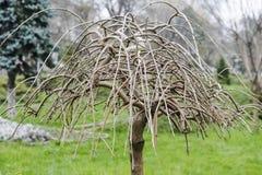 O guarda-chuva #1 da árvore Imagens de Stock Royalty Free