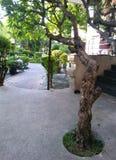 O guia do ramo de árvore ao jardim da luz do sol Foto de Stock