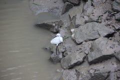 O guindaste branco e polui o rio Fotografia de Stock