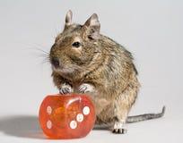 O hamster engraçado com grande morre bloco Fotografia de Stock Royalty Free