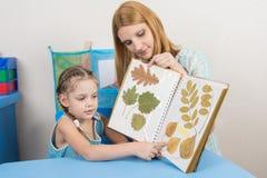 O herbário de exame de cinco anos da menina e da mãe mostra em uma folha de um álbum Imagem de Stock Royalty Free