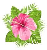 O hibiscus cor-de-rosa bonito floresce a flor e as folhas tropicais ilustração do vetor