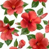 O hibiscus cor-de-rosa floresce o teste padrão sem emenda Fotos de Stock Royalty Free