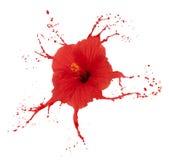 O hibiscus vermelho com espirra Fotos de Stock Royalty Free