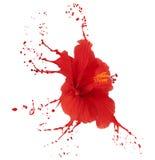 O hibiscus vermelho com espirra Imagens de Stock Royalty Free