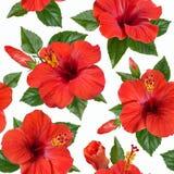 O hibiscus vermelho floresce o teste padrão sem emenda Foto de Stock