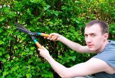 O homem é tosquiadeiras do arbusto da estaca Foto de Stock