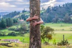 O homem abraça a árvore grande fotos de stock royalty free