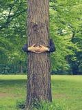 O homem abraça uma árvore grande imagens de stock