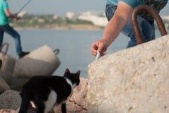 O homem adulto alimenta ao gato um peixe Fotografia de Stock Royalty Free