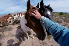 O homem afaga a cabeça de cavalo com sua mão fotos de stock