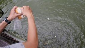 O homem alimenta carpas com fome grandes com partes do pão branco 4K filme