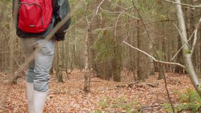 O homem anda no sentimento velho seco da floresta do outono do prazer e da calma filme